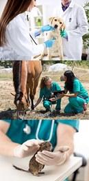 Animal / Veterinary